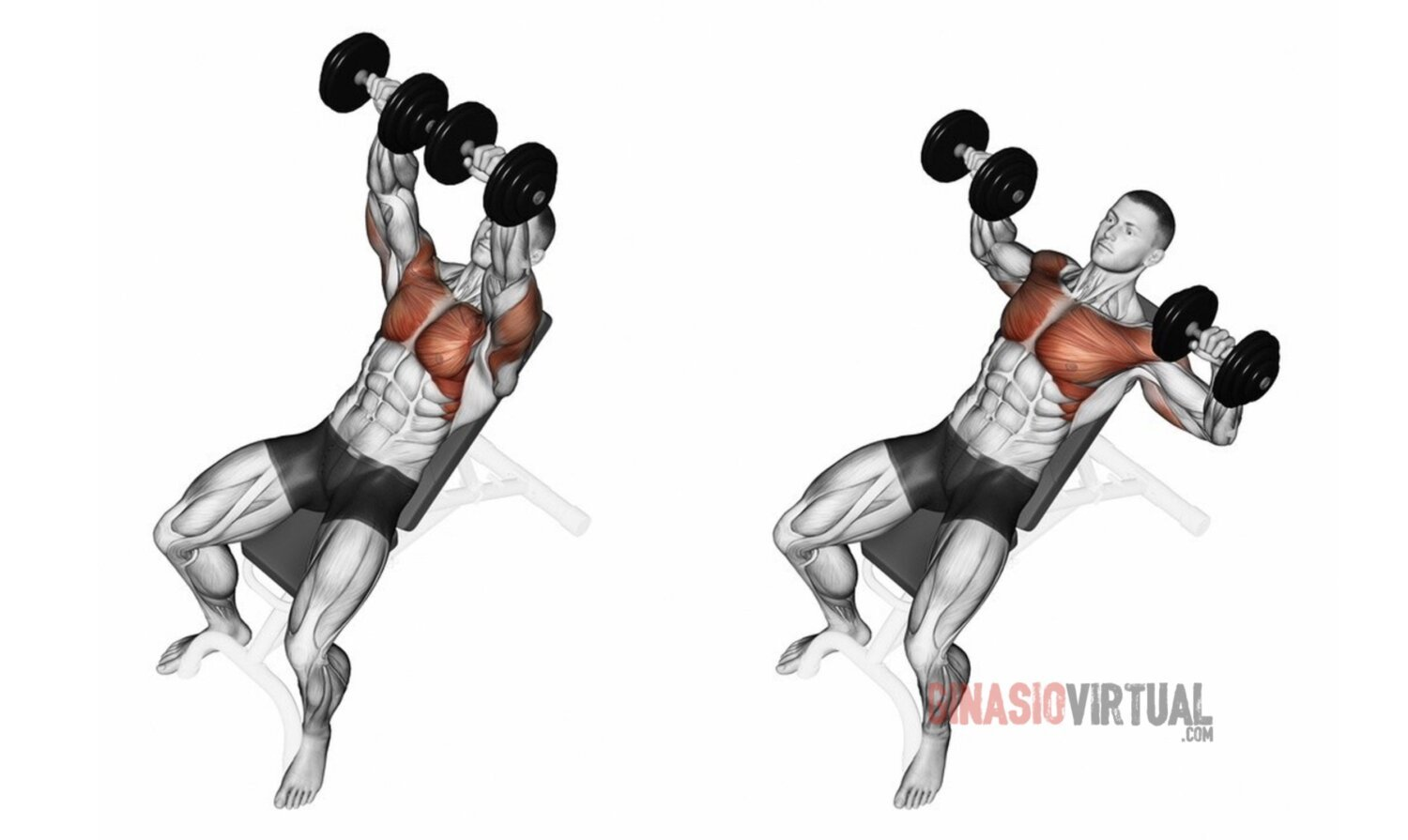 inclined chest press gymnastics