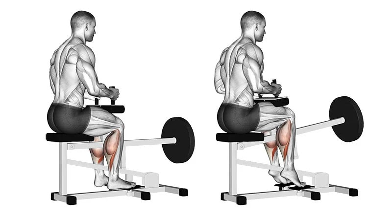 Elevation of twins on a seated machine