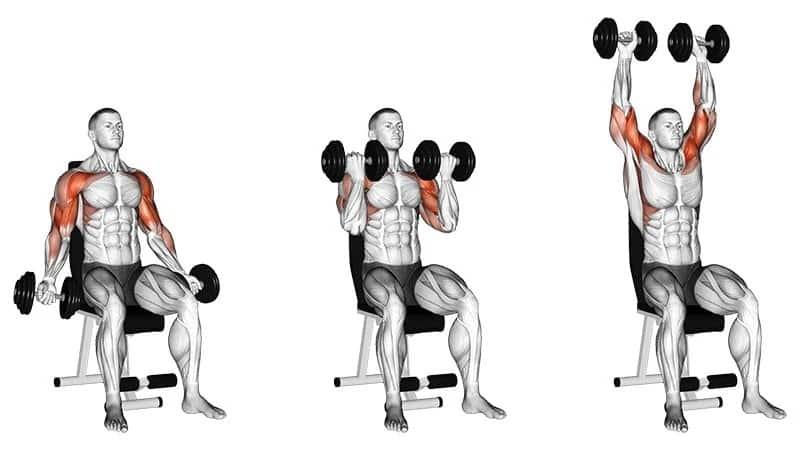 curl biceps avec presse à épaules