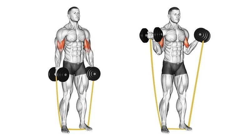 bicep curl with dumbbells and band