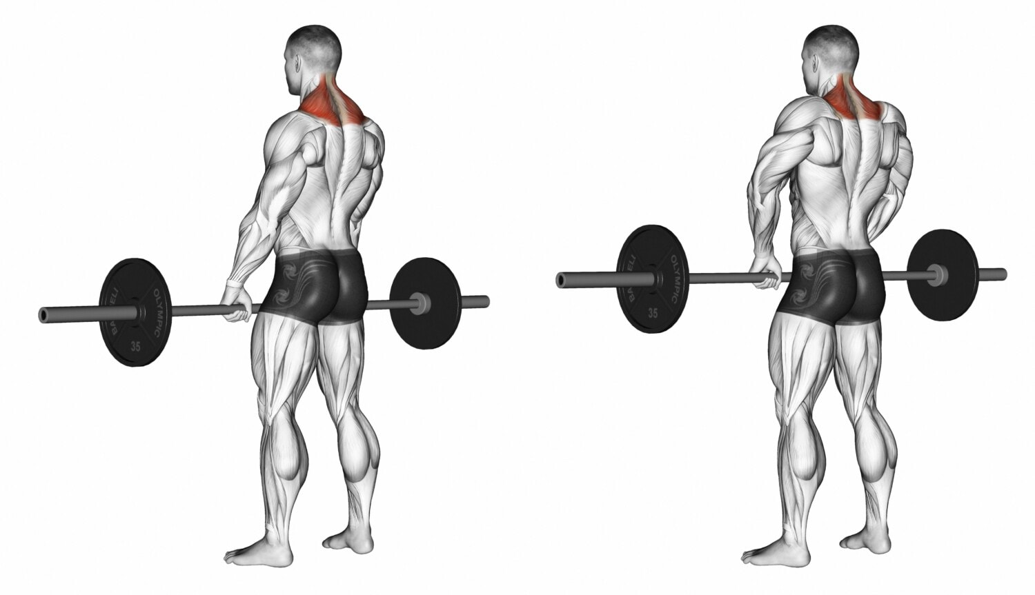 shrugs with bar